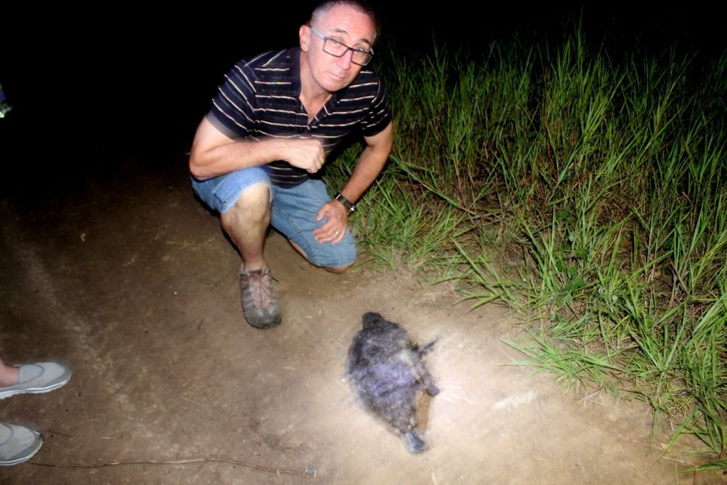 CONCERNS: Collingwood Park resident Jim Dodrill finds a dead platypus close to development at Six Mile Creek.
