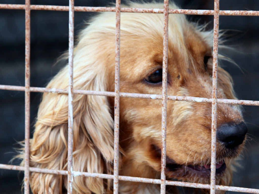 Puppy mills are just as appalling as treatment of dogs in the greyhound racing industry, writes Annelies Craig.