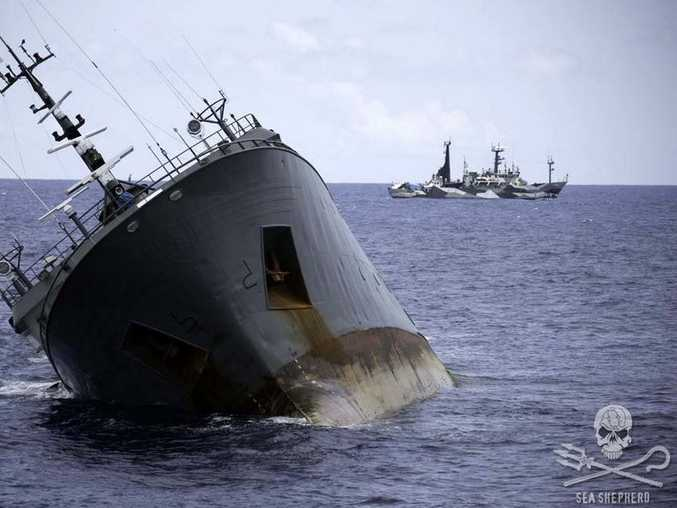 The crew of suspected poaching vessel Thunder, pictured front, are rescued by the Sea Shepherd's ship Bob Barker. The Bob Barker captain believes the Thunder sank