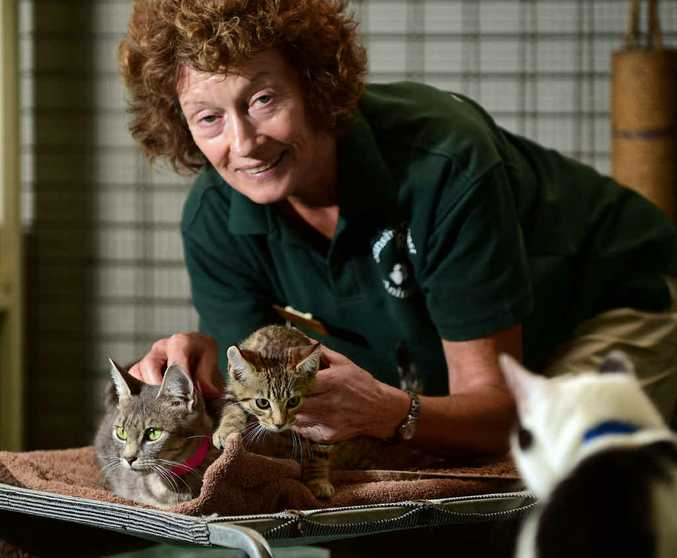 LIVING IN HOPE: Volunteer Robyn Kindermann at the Sunshine Coast Animal Refuge, where many cats like Gemma and her kitten Goblin are awaiting a new home.