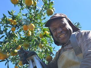 Citrus season about to get juicy