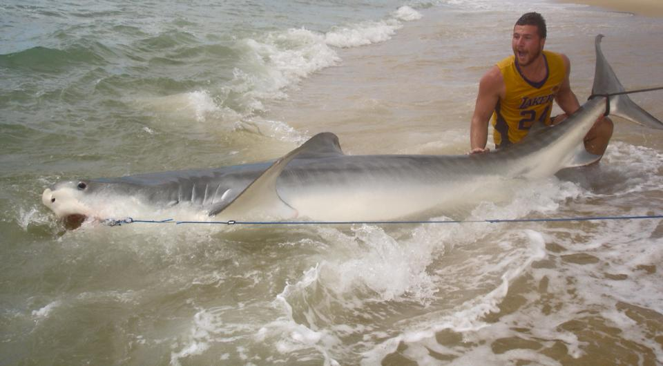 Max Muggeridge, 19, of Coomera reels in a 4m tiger shark before setting it free.