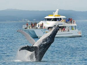 Boaties urged to stay safe distances from whales