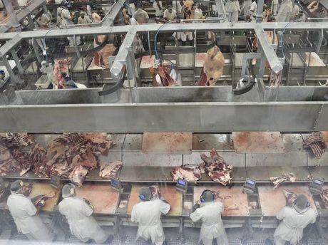 Oakey Beef Exports.