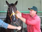"""Basil Nolan Jnr giving """"Publishing Filly"""" a wash ahead of the Capricornia Yearling Sales at the Robert Schwarten Pavilion, Rockhampton Showgrounds on Sunday. Photo: Chris Ison / The Morning Bulletin"""
