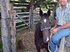 Historic Kilkivan ride was family's destiny