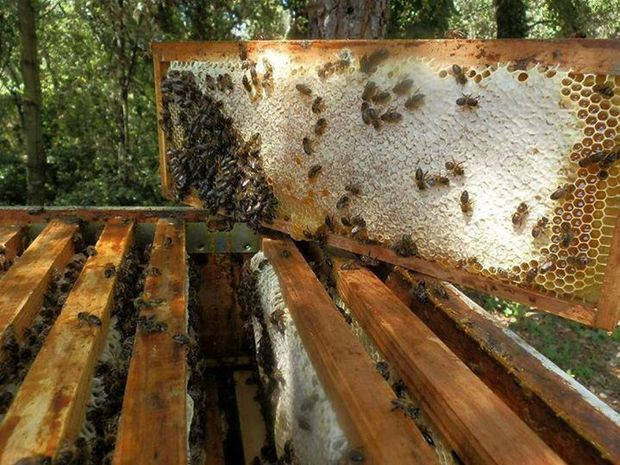 One of Mark Rook's beehives.
