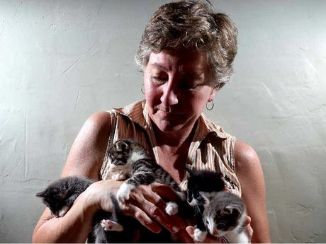 CAT HAVEN: Michela Brown with cats that were found abandoned in Goonellabah.