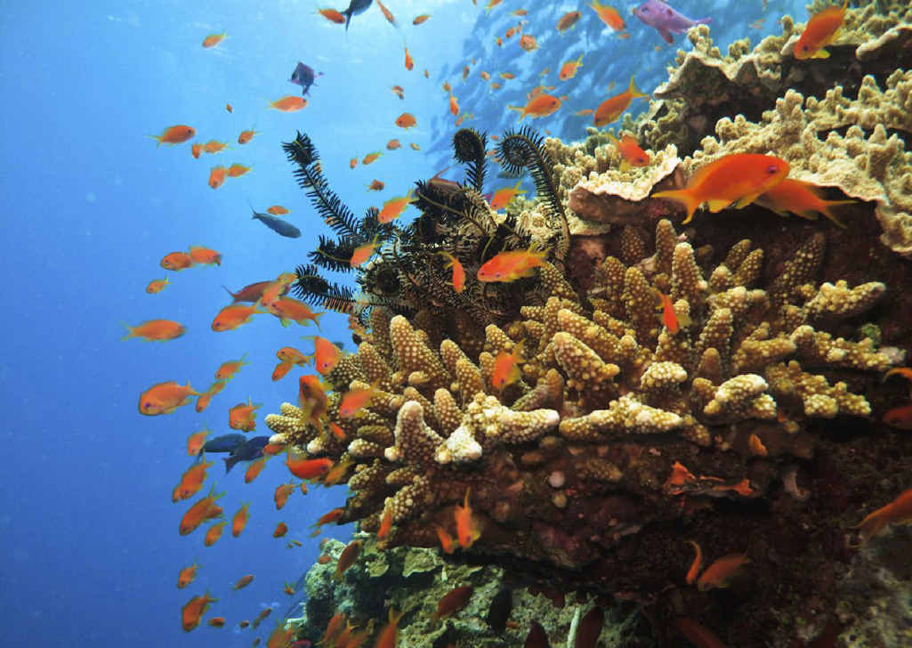 FEARS RAISED: A new campaign is pushing for more protection for the Great Barrier Reef.