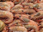 White spot disease confirmed in some Moreton Bay prawns