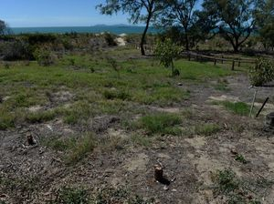 50 trees illegally destroyed along Bucasia Beach