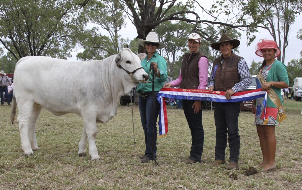 SUPREME CHAMPION FEMALE: From left, Hamilton Park Katy Perry, Anna Ahern (Romagnola Beef Genetics, Roma) with judges Paula and Ross Warren (Elridge Charolais) and Gayndah Miss Showgirl 2015 Jessica George. Photo Contributed by Robyn Whitaker
