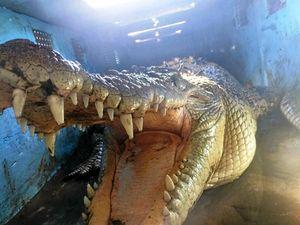 Investigation reveals '3 metre crocodile' lurking at Boyne