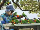 'Bird lady' shares her daily love of lorikeets