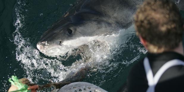 A shark attacks a film crew's dinghy.
