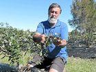 ADVICE: DPI development officer Phillip Wilk spoke with Coffs Coast blueberry growers this week.