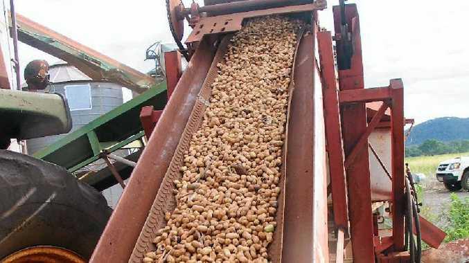 Rain has caused a few challenges for South Burnett peanut farmers.