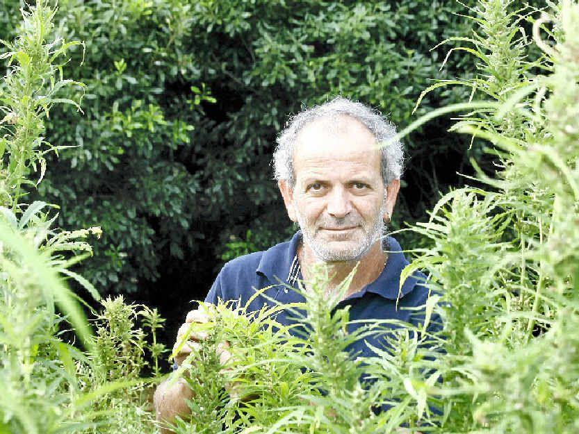 BLOCKING PROGRESS: Hemp farmer Andrew Kavasilas says roadside drug testing blocks the growth of a legitimate hemp food industry.
