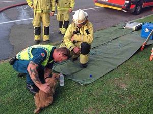 Firies and paramedic save cat from house blaze