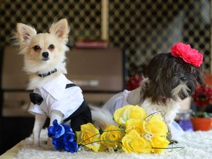 Mount Morgan Canine Wedding
