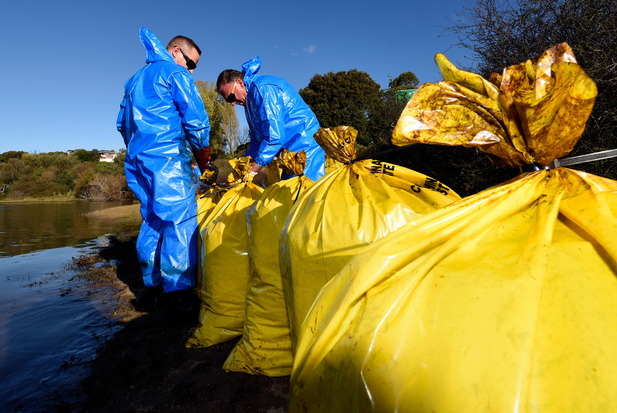 Workers in protective gear cleaned parts of the shoreline in New Zealand's Maungatapu, piling oil-coated vegetation and debris into plastic bags along the shore.