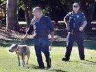 Escaped dogs kill pony and maul horse