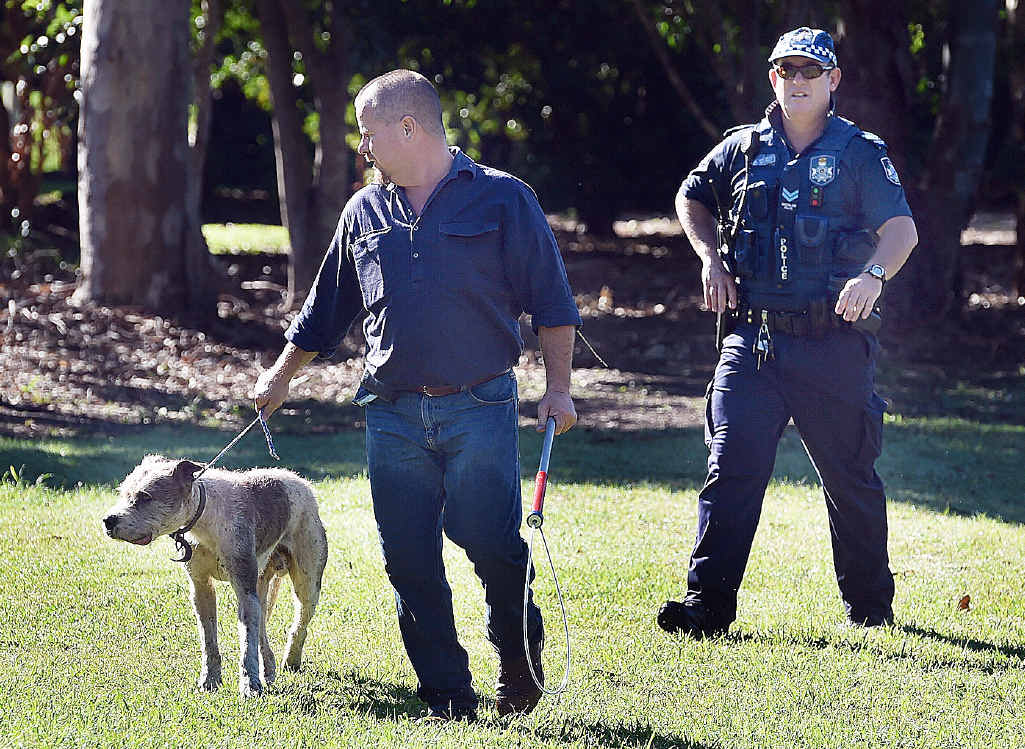 PUT DOWN: One of the dogs that mauled a pony at a Doolong Road property is taken by a council compliance officer.