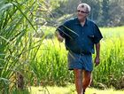CHOICES SOUGHT: Canegrowers Queensland chairman Paul Schembri.