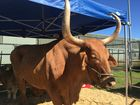 BEEF WEEK: Plenty of exhibitions for all types to see