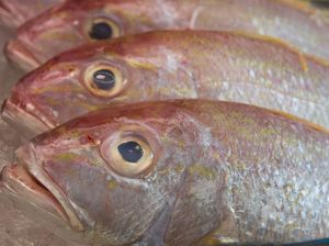 Seafood industry bites back at Nets Out Queensland claims