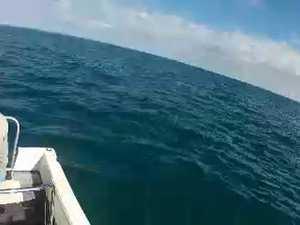 Shark steals fish from fisherman