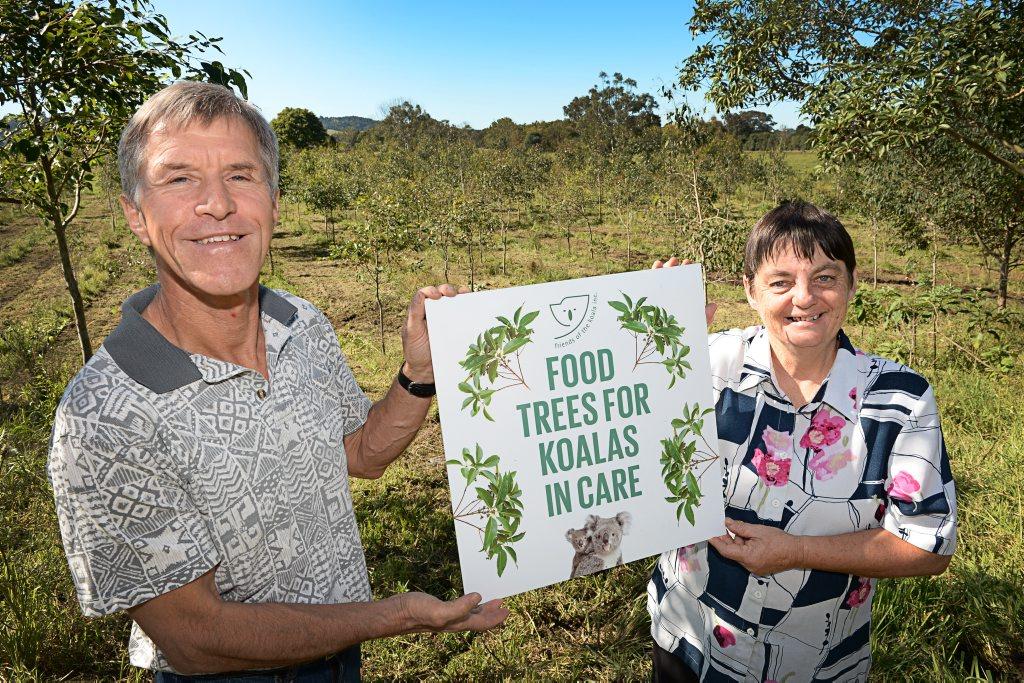 Couple uses their 2000 trees to help save the koalas