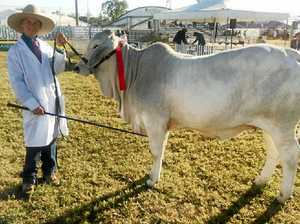 Hunters show their quality at Beef Week