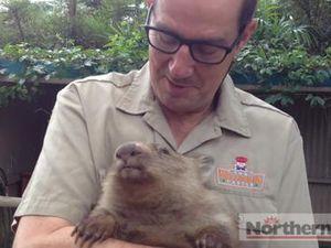 Minnie the wombat moves into Macadamia Castle