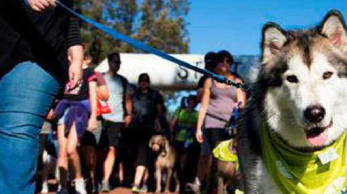 WALKING THE DOG: Are you and your pets ready to step out for the RSPCA?
