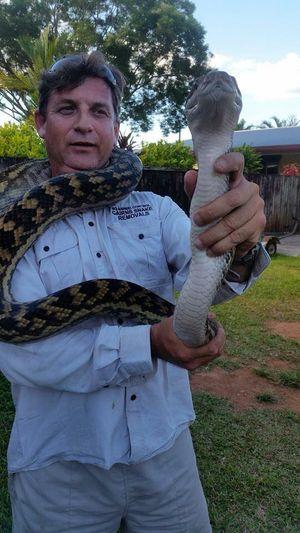 Dave Walton of Cairns Snake Removals wrangles a scrub python