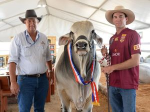 Victory at Beef with champion interbreed