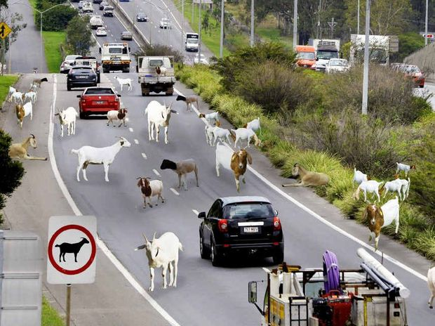 JUST FIX IT: Blair MP Shayne Neumann wants a serious commitment in tonight's budget to fund the Darra to Rocklea stretch of Ipswich Motorway, which has been described as a goat track.