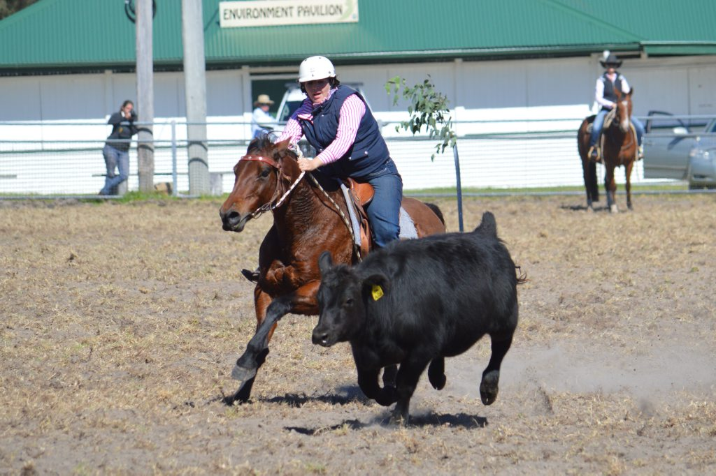 Sarah Chapman from Tenterfield competing at the Stanthorpe campdraft at the weekend.