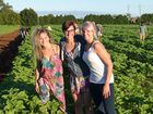 AIN'T ALL BAD: Backpackers like Alice Arzenton, Irene Brussa and Jasmine Piller are thrilled to have found somewhere like Robertson Flower Farm in Bundaberg that treats them well. Photo: Max Fleet / NewsMail