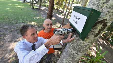 Micro bat box number 100 - Mayor Gerard O'Connell screws the 100th micro bat box to a tree at Dundowran under the watchful eye of environmentalist John Parsons. Photo: Alistair Brightman / Fraser Coast Chronicle