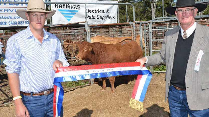 WINNING WAYS: Proud Kenilworth cattleman John Ferriday and Gympie Show prime cattle judge Steve Dunn, of Murgon, enjoy the moment with Mr Ferriday's Grand Champion heifer.