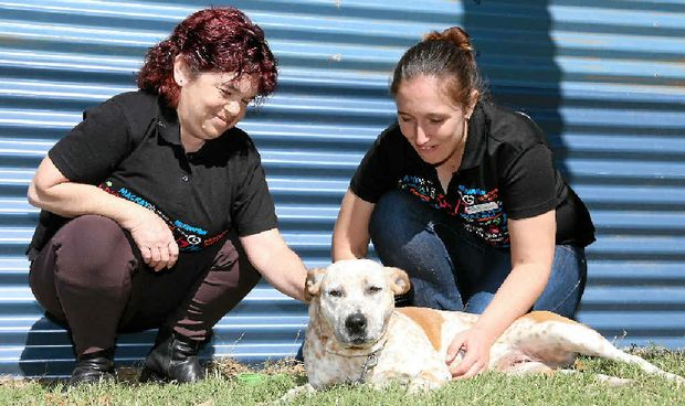 RIGHT, WAITING TO WALK: Staffordshire bull terrier cross Kara with RSPCA volunteer Dannii Agius and assistant shelter manager Kirsty Minter.
