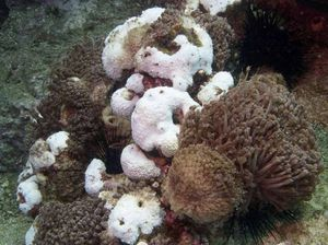 UPDATE: State Govt calls for action on reef coral bleaching