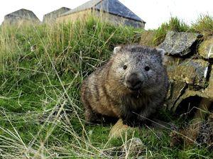 Where to see wildlife in Tasmania