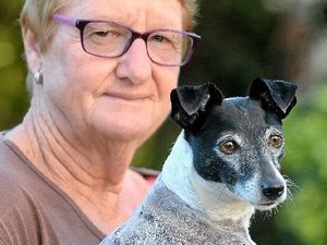 WATCH: Owner's horror as dog mauled in Kawana park