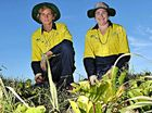GETTING STUCK INTO IT: Green Army workers Jaye Digman and Timony Edwards pull out weeds on the dunes at Alexandra Headland.