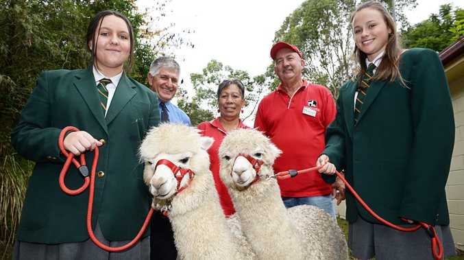 LR-Year 9 student, Eloise Forzan, Mick Melino,teacher, Jackie and Bob Coxon of Nattameri Alpacas, and Anna McNaught, Year 9 student at Woodlawn. Jackie and Bob Coxon, donated two alpacas to the school after their heard about the incident with wild dogs whick killed two of the alpacas of the school a few months ago. Photo Mireille Merlet-Shaw / Northern Star