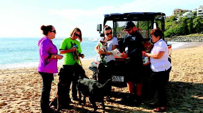Council Officer Rob Evans providing advice from the responsible dog ownership brochure to Simone Byatt of Nicklin Way Vet, Jody Blackburn of Sunshine Coast Animal Refuge, Megan Lenske of Nicklin Way Vet and Julie Penlington of 4Paws.