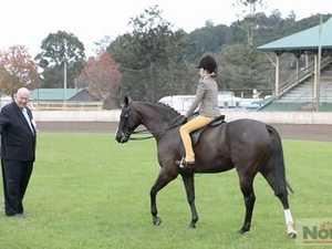 Horse hack in Lismore